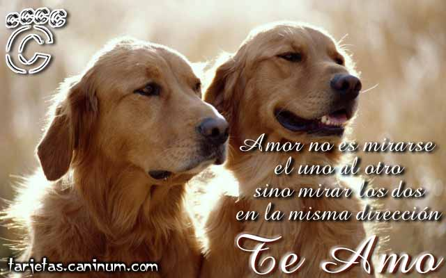 http://www.caninum.com/imagenes/tarjetas/enamorados2.jpg